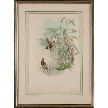 "John Gould (British, 1804-1881) and H. C. Richter (British, 1821-1902) A Pair of Two Plates from John Gould's ""A Monograph of the Trochilidae (Family of Hummingbirds)"