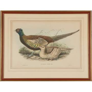 "John Gould (British, 1804-1881) and William Matthew Hart (British, 1830-1908) A Selection of Three Plates from John Gould's ""Birds of Australia"" and ""Birds of Asia"""