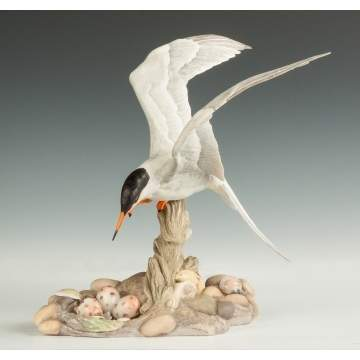 "Boehm Porcelain ""Common Tern"""