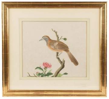 Early Watercolor of Bird and Floral
