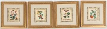 Four Merian Framed Botanical Hand Colored Engravings