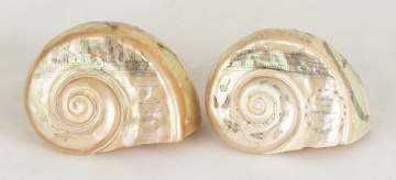 Two Scrimshaw Shells