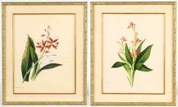 Two Chinese Botanical Watercolors