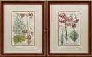 2 Jacob Weinman Botanical Prints