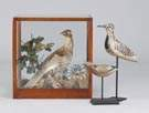 Grouse Diorama & Carved Painted Shorebirds