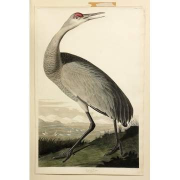 John James Audubon (American, 1785-1851) (After) Hooping Crane, Grus Americana, Plate CCLXI