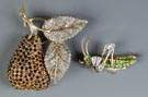 Pear Brooch & Grasshopper Brooch